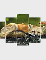 Отпечатки на холсте Животное Modern,5 панелей Холст Любая форма Печать Искусство Декор стены For Украшение дома