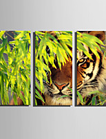 E-HOME Stretched Canvas Art Tiger In The Woods Decoration Painting Set Of 3