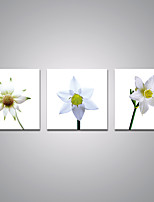 Stretched Canvas Prints White Flowers  Printed on Canvas Modern Art for Home Decoration