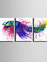 E-HOME Stretched Canvas Art  Watercolor Peacock Decoration Painting Set Of 3