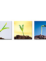 Stretched Canvas Prints Sprouting Seeds  Picture Printed on Canvas Modern Art for Wall Decoration