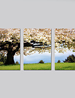 Stretched Canvas Print Floral/Botanical Modern Pastoral,Three Panels Horizontal Print Wall Decor For Home Decoration