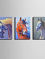 E-HOME Stretched Canvas Art  Horse Charm Decoration Painting One Pcs