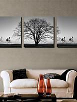 Impression d'Art A fleurs/Botanique Pastoral,Trois Panneaux Format Horizontal Imprimé Décoration murale For Décoration d'intérieur
