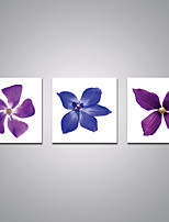 Stretched Canvas Prints Purple Flower and Dark Blue Flower  Printed on Canvas Modern Art for Wall Decoration