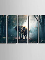 E-HOME Stretched Canvas Art The Elephant In The Morning Forest Decoration Painting Set Of 5
