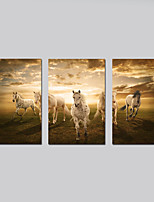 Stretched Canvas Print Animal Modern Classic,Three Panels Horizontal Print Wall Decor For Home Decoration