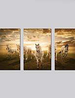 Impression sur ToileTrois Panneaux Format Horizontal Imprimé Décoration murale For Décoration d'intérieur
