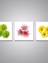 Stretched Canvas Prints Flower Daisy and Chrysanthemum  Printed on Canvas Modern Art for Wall Decoration