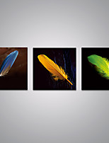 Stretched Canvas Prints Feathers Printed on Canvas Modern  Plumes Art for Home Decoration