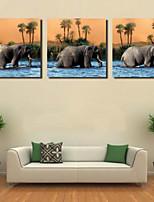 Impression d'Art Animal Moderne,Trois Panneaux Format Horizontal Imprimé Décoration murale For Décoration d'intérieur