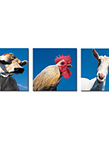 Stretched Canvas Prints  Cow Cock Sheep Picture Printed on Canvas Contemporary Animal Art for Wall Decoration