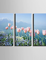 E-HOME Stretched Canvas Art Tulips On The Coast Decoration Painting Set Of 3