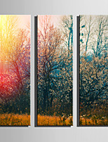 E-HOME Stretched Canvas Art The Woods At Dusk Decoration Painting Set Of 3