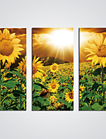 Stretched Canvas Print Sunny Sunflowers Flower Canvas for  Wall Decoration Ready to Hang