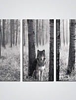 Stretched Canvas Print A Wolf in the Forest Modern Animal Artwork for Wall Decoration