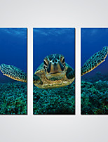 Stretched Canvas Print  An Old Turtle in the Blue Ocean Modern Sea Art for  Wall Decoration Ready to Hang