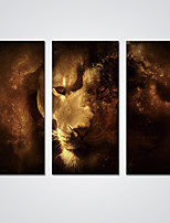 Stretched Canvas Print HD Lion Picture  Modern Canvas Art for  Wall Decoration Ready to Hang