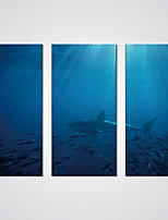 Stretched Canvas Print Fishes in Deep Ocean   Modern Canvas Art for Home Decoration Ready to Hang