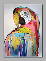 Hand-Painted The Parrot Animal  Oil Painting On Canvas Modern Wall Art Picture For Home Decoration