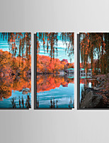 E-HOME Stretched Canvas Art The Park Scene In Late Autumn Decoration Painting Set Of 3