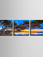 E-HOME Stretched Canvas Art Lakeside Tree Decoration Painting Set Of 3