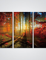 Canvas Prints  Forest with Red Leaves Landscape Canvas Art for Office Decoration Ready to Hang
