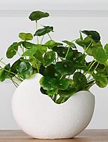 1 Branch Hydrocotyle Verticillata Artificial Flowers