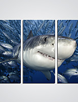 Canvas Print A Shark in Ocean  Picture Print on Canvas for Wall Decoration Ready to Hang