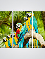 Canvas Print Parrots on the Tree Picture Print on Canvas Modern Bird Painting for  Decoration Ready to Hang 30x60cmx3pcs