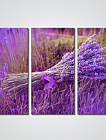 Canvas Print Purple Lavender Flower Canvas Art for Wall Decoration Ready to Hang