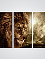 Canvas Print Lion Picture Print Art for Wall Decoration Ready to Hang