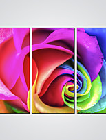 Stretched Giclee Print  Colorful Rose Flower  Picture Printed on Canvas  Ready to Hang 30x60cmx3pcs