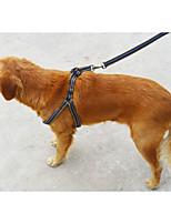 Harness Portable Stripe Nylon