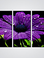 Stretched Giclee Print  A Purple Flower  Picture Printed on Canvas  Ready to Hang 30x60cmx3pcs