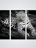 Canvas Print A Black and White Leopard  Picture Print on Canvas for Decoration Ready to Hang