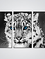 Canvas Prints Black and White Tiger with Blue Eyes Animal Canvas Art for Wall Decoration Ready to Hang