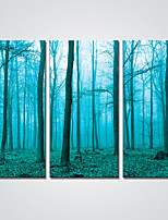Canvas Print  Blue Forest Landscape Print Art for Wall Decoration Ready to Hang
