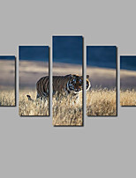 Fahion Wall Art Painting on Canvas Tiger 5 Panels Set Posters HD Printed Grassland Photos For Modern Home Decoration