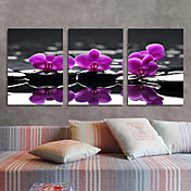 Stretched Canvas Art Floral Purple Orchid Set of 3
