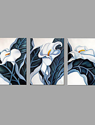 Hand-Painted Flower/Botanical Oil Painting For Home Decoration with Stretched Framed