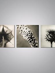 Stampe a tela Floreale/Botanical Modern,Tre Pannelli Tela Orizzontale Stampa artistica Decorazioni da parete For Decorazioni per la casa