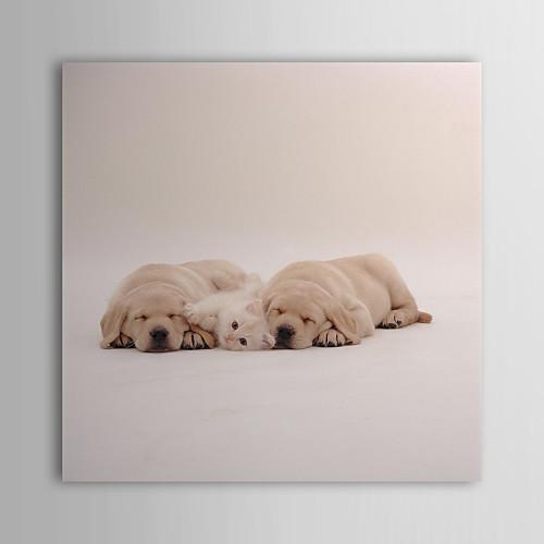 Натянутым холстом искусства животными Sleepy собак Interlitho дизайнов Lightinthebox 1503.000