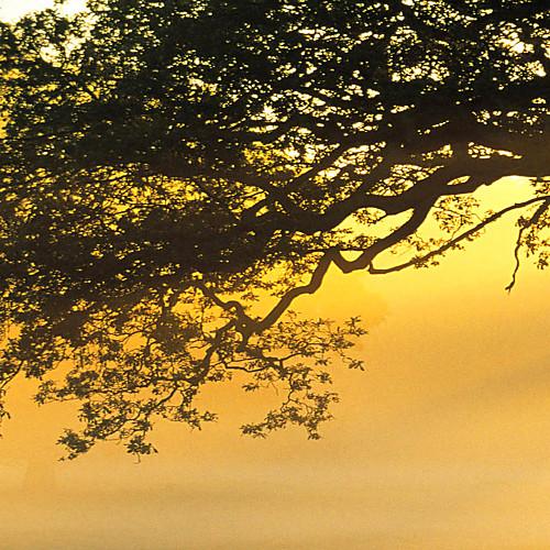 Натянутым холстом печати искусств Ботанический Golden Tree Набор из 3 Lightinthebox 2577.000