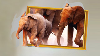 Wall Stickers Sale
