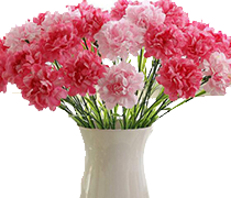 Flowers & Plants Sale