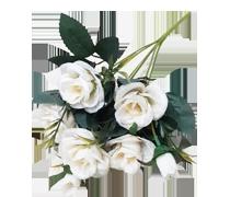 Kwiaty & Rośliny