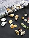 100st mix formar naturliga skal tillbehör som inte ingår box 3d nagel konst dekoration