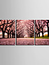 Landskapsstig av Sakura på sträckt målarduk, set om tre