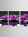 ensemble de 3 lilas floral large de la côte de toile toiles tendues prêt à accrocher